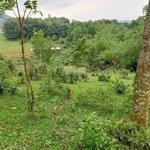 8000m2 phù hợp làm nhà vườn nghỉ dưỡng hoặc trang trại tại lương sơn,hoà bình giá cực rẻ