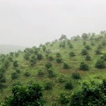 Bán trang trại 21ha trồng cây ăn quả và lấy gỗ, tại lương sơn, hoà bình, giá bán 17,9 tỷ