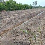 Cần bán đất vườn sổ hồng riêng xã tân thành - huyện thủ thừa - long an