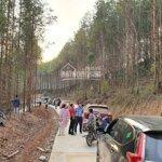 Bán đất rừng sản xuất 165 triệu/10.000m2 đã có sổ đỏ riêng công chứng trong ngày