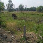 đất nền giảm giá trong mùa dịch