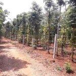 Bán đất sào 3 mặt tiền huyện cư kiun - tp. bmt