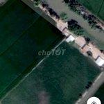 Bán đất trồng lúa, trồng sen 9300m2
