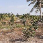 đất làm nhà vườn nghỉ dưỡng hay làm trang trại tại xã mỷ thạnh, huyện thủ thừa, long an.