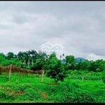 Bán đất xã yên trung làm trang trại, nhà vườn sinh thái