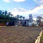 Bán 2.5 ha trang trại cây xanh tốt tại xã nhân đạo