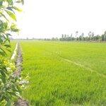 Cần bán 100000m2 đất gần ubnd huyện giang thành-kg
