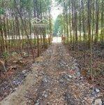 Bán đất trang trại huyện can lộc 100000m²