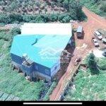 đất trồng sầu riêng có nhà và xưởng chính chủ