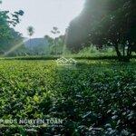 Cần bán lô đất rộng 4500m2 có 400m2 thổ cư, thích hợp xây dựng farmstay, nhà vườn hoặc trang trại