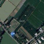 Vườn cam đang ra trái 10.400mv