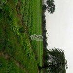 Bán trang trại đất sổ hồng 50 năm