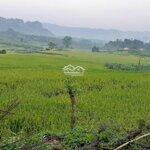 Bán 75ha (750.000 m2) đất làm sinh thái, khu du lịch hòa bình, cách hn 100km