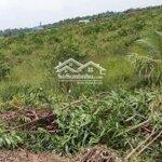 Cần tiền bán 2000m2 đất cây lâu năm giá bán 900 triệu, gần trường thcs tân thành