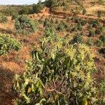 Bán đất vườn trồng câymặt tiềnđắc hà, huyện đắk glong, tỉnh đắk nông