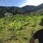 đất rừng sản xuất huyện lương sơn