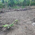 Cần sang nhượng lại đất ngang 15m dài 45m, giá bán 1,2 tỷ, tại huyện châu thành, tiền giang