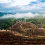 Bán vườn sầu riêng 4000m2 kết hợp sinh thái nghỉ dưỡng - durian farmstay
