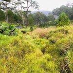 206 hecta đất 50 năm mặt đường từ đà lạt xuống nha trang