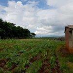 đất vườn xã kdang, đăkđoa 5056m2 giá tốt