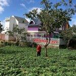 D720 ⭕️⭕️cần bán đất 2 mặt hẻm ô tô đường mai anh đào - phường 8 - thành phố đà lạt