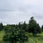 Bán lô đất vườn gần tt ma đa guôi, chỉ 420 triệu / 830m2
