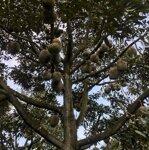 Bán đất vườn,1,7ha, có nhiều cây ăn trái