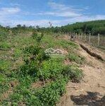Đất Vườn 16549M2 Tỉnh Lộ 8B Khánh Bình, Khánh Vĩnh