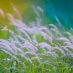 Chính Chủ Gửi Bán Biệt Thự Song Lập Vườn Tùng, Ecopark Giá Rẻ Nhất. Liên Hệ: 0973097187