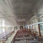 Cân bán trại lợn tại lạc hưng yên thủy hòa bình