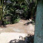 Bán đất trang trại huyện mỏ cày nam bến tre