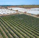 đất nông trại phan thiết 60ngàn/m2 có sổ liền tay