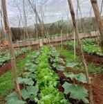 Cần bán 4 sào đất nông nghiệp trong tp