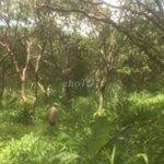 Cần bán lô đất điều thuộc khu vực đăk lía