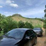 38ha rừng sản xuất tại lạc thuỷ hoà hình!