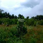 Bán Đất Trồng Cây Diên Xuân, Đã Lập Vườn 2 Năm, Tưới Tiêu Tận Gốc