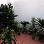 Nhà Vườn Ngõ 310 Nghi Tàm