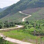 đất rừng sản xuất trồng cây bạch đàn cao sản