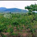 Mùa dịch bán mảnh đất phân lô siêu lợi nhuận
