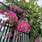Nhà vườn nhỏ xinh trung tâm tp bmt gần big c