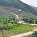 đất rừng sản xuất - xu hướng đầu tư 2020