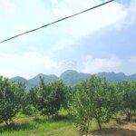 Cần bán 4600m2 đất trang trại nhà vườn tại xã phú thành, huyện lạc thủy