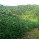Bán gấp 10ha đất rsx tại lạc thủy có 560m2 đất ở và 2500m2 đất vườn, sẵn nhà 2 tầng, đồi thoải đẹp
