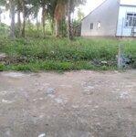 đất trồng dừa đang thu hoạch ở phú nhuận, tp bến tre 256m2