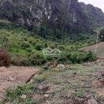 Cần bán 5 ha đất rừng sản xuất giá yêu thương