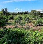 đất vườn cù lao an bình mặt tiền sôg lớn
