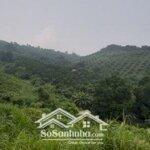 Cần bán mảnh đất 4,1ha rừng sản xuất lương sơn hòa bình