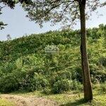 Chuyển nhượng gấp lô đất rừng sản xuất giá rẻ tại lương sơn, hòa bình diện tích 7.2ha.