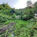 Bán đất làm trang trại nghỉ dưỡng với giá siêu rẻ tại lương sơn, hòa bình diện tích 8000m2