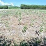 Cần bán lô đất bằng phẳng xã diên xuân chỉ với giá bán 230 triệu. liên hệ: 0982497979